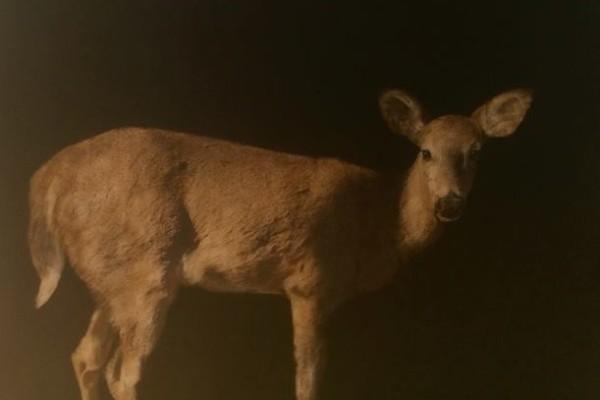 real_life_11_deer