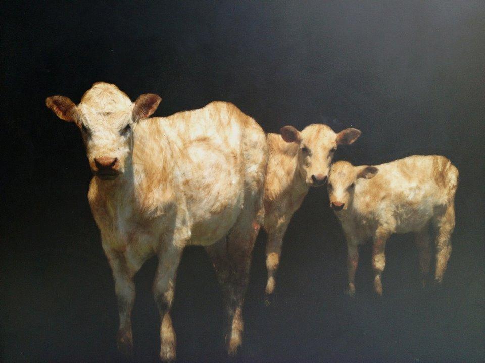 real_life_12_cows